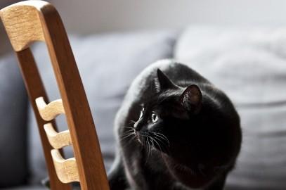 art deco i koty